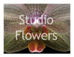 Studio Flowers Images (3 Galleries)