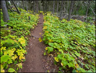 Trail to Three Mile, Isle Royale National Park, Michigan, Lake Superior